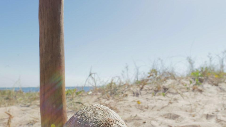 The Beach - Art Dir/Stills/Food