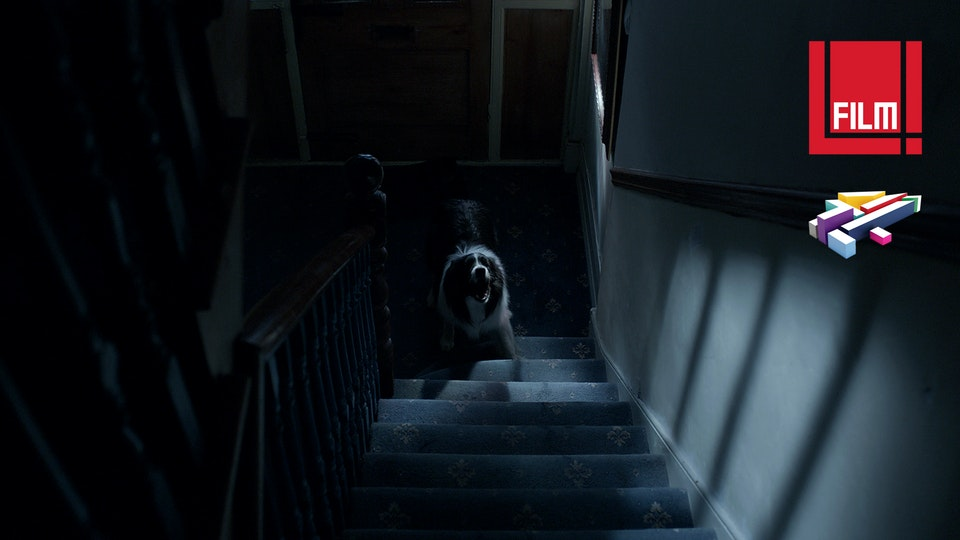 ANDREW BRAND - Director / Motion Designer - What The Dog Saw (2015)