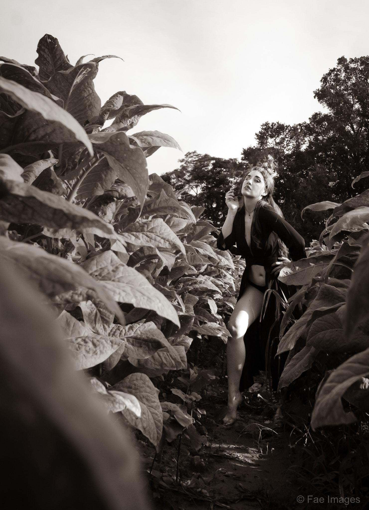 Fae Images - Susan-tobacco-web-6