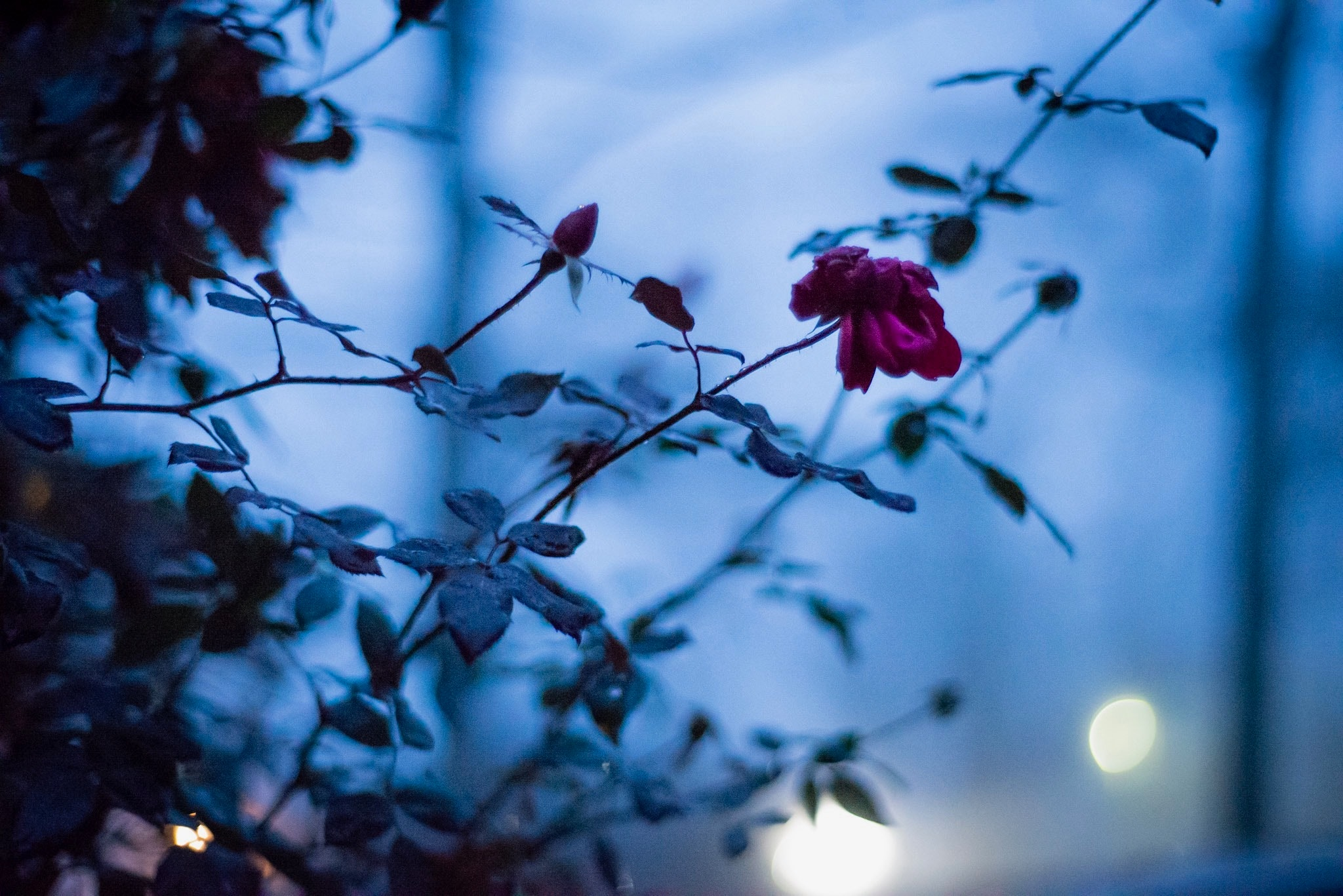 Fae Images - IMG_5066