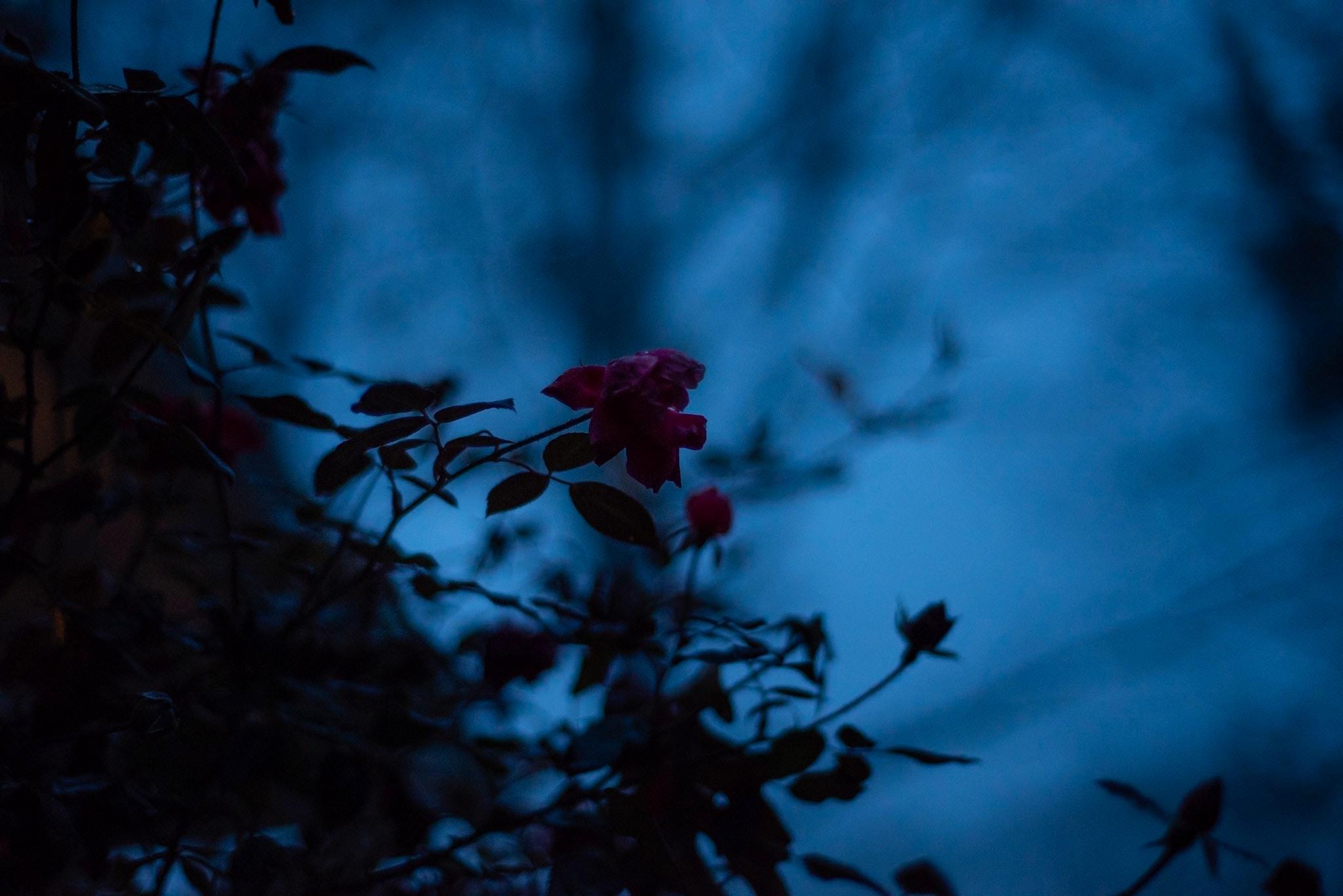 Fae Images - IMG_5063