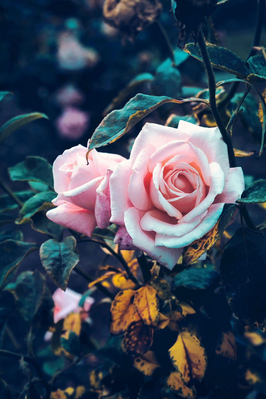 2018 - <b>floral harvest</b>