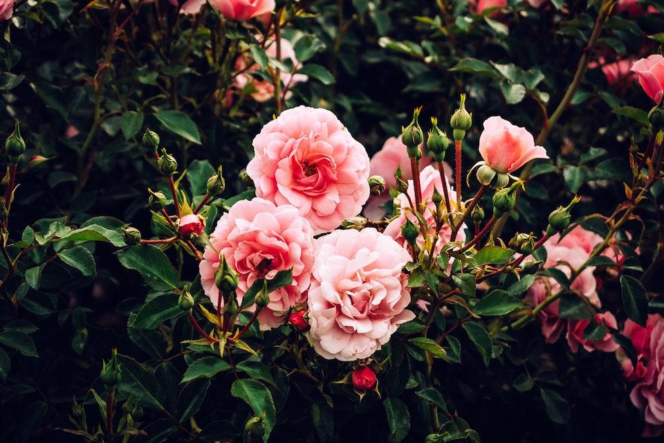 2018 - <b>summer rosé 1</b>