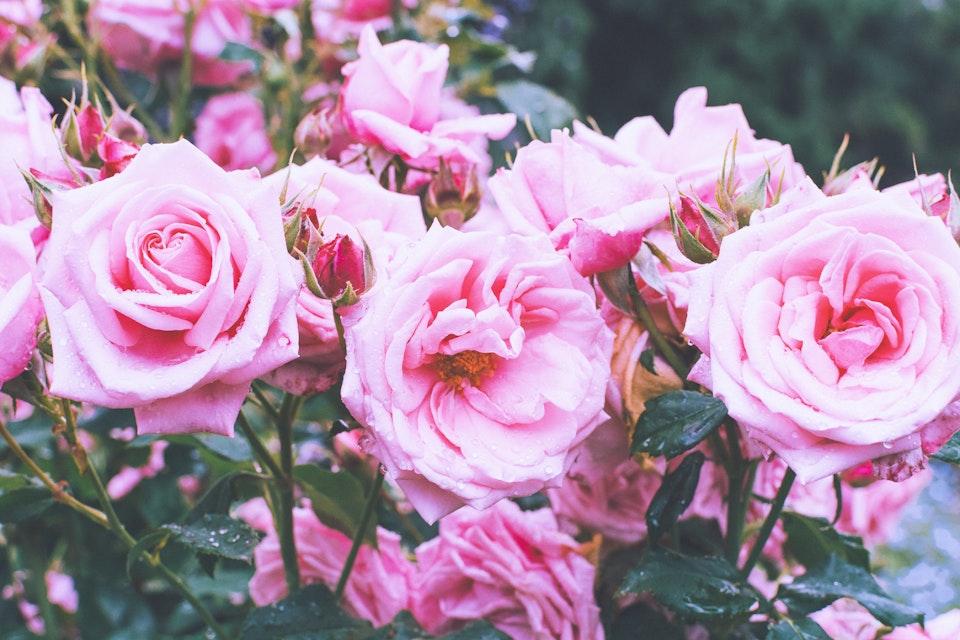 2019 - <b>pink moments 3</b>