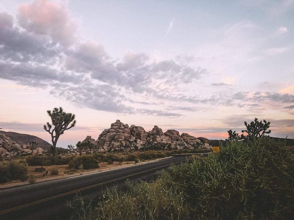 Phone - Scorpo Desire; Joshua Tree National Park, CA