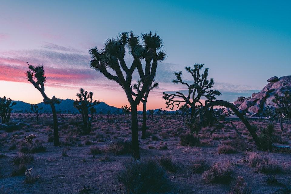 2018 - <b>desert sun 4</b> joshua tree national park, ca