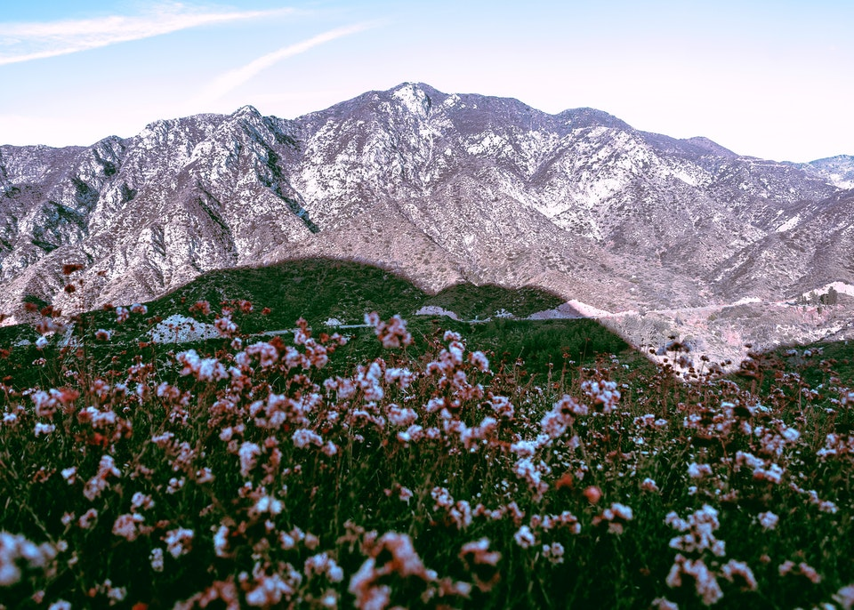 2019 - <b>floral shadow</b> angeles national forest, ca