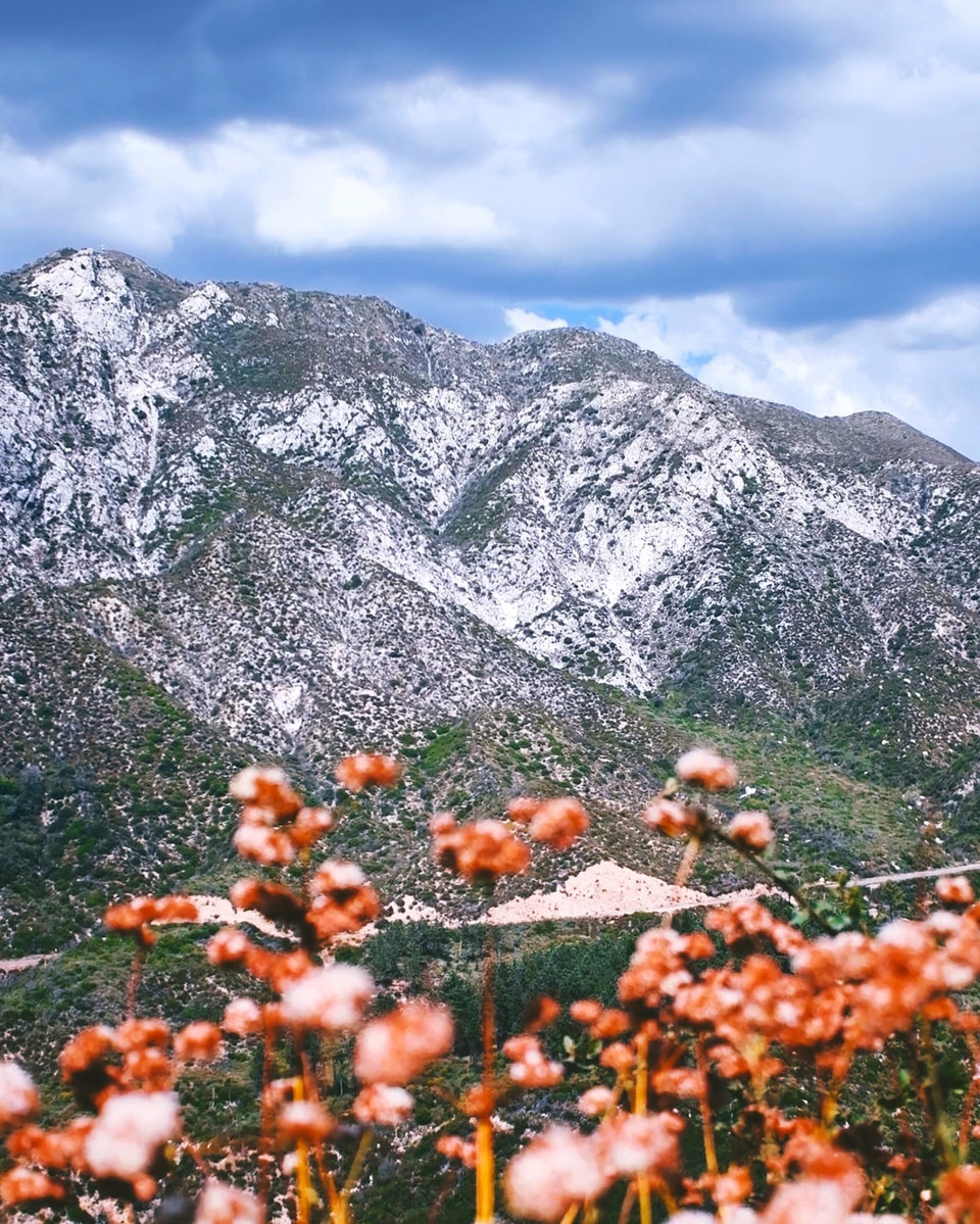 2019 - <b>june blooms</b> angeles national forest, ca