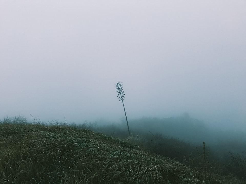 Phone - Fog Dreams; La Tuna Canyon, CA