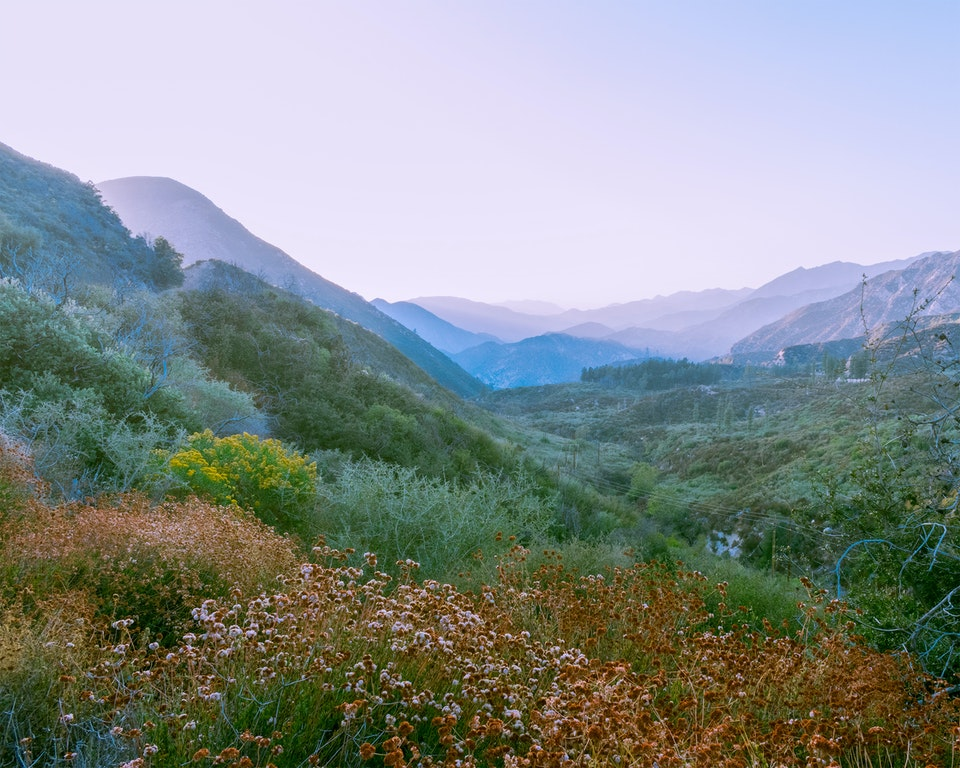 new - <b>spring delight</b> angeles national forest, ca