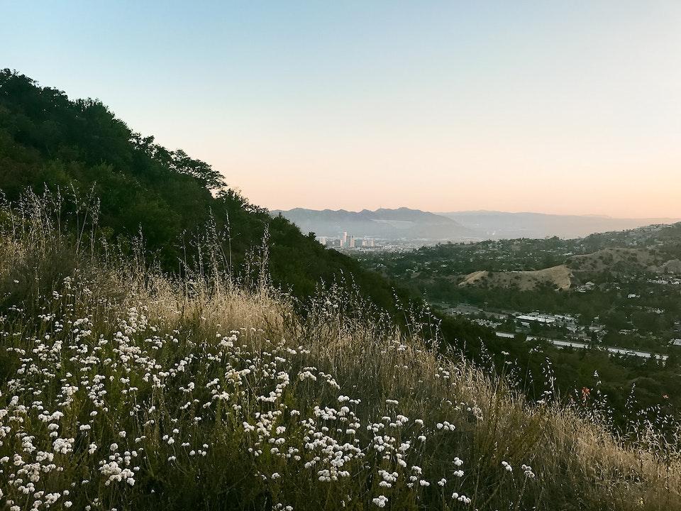 Phone - Harvest; Glendale, CA
