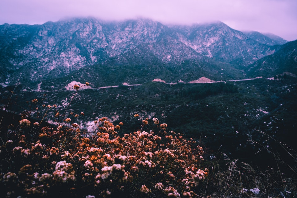 """2018 - <b>winter bloom</b> more of this series -> <a href=""""https://leahbermanstudio.com/portfolio/angeles-crest"""" style=""""color:#800080;"""">angeles national forest, ca</a>"""