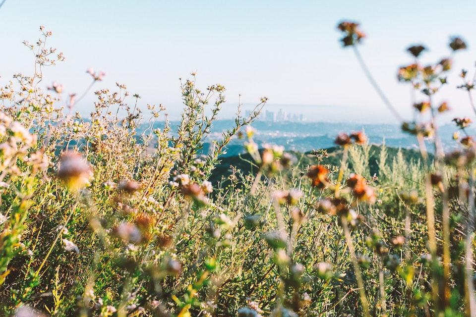 2019 - <b>callifornia buckwheat 1</b> los angeles, ca