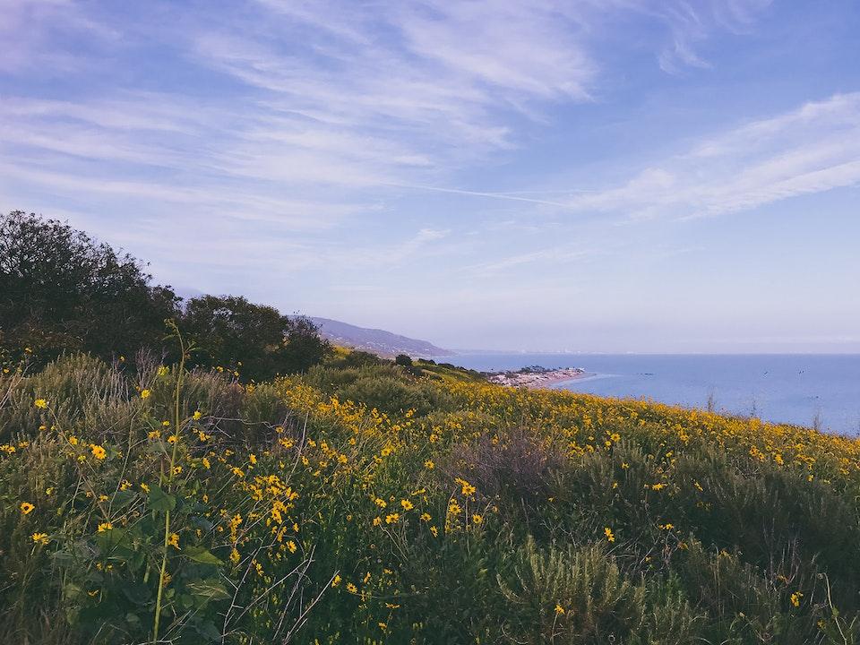 Phone - Flowersetting; Malibu, CA