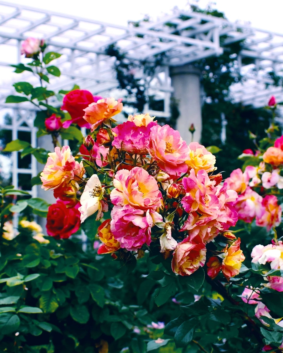 2019 - <b>garden moments</b>