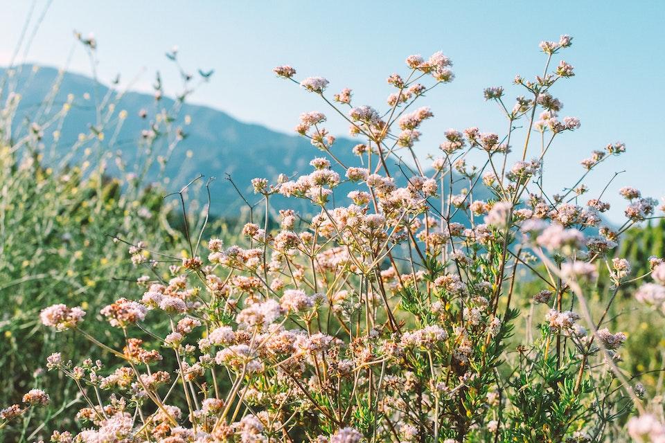 2019 - <b>california buckwheat 3</b> los angeles, ca