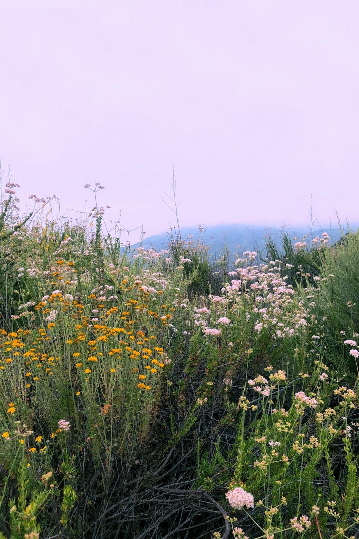 2020 - <b>wildflower ridge 2</b> los angeles, ca