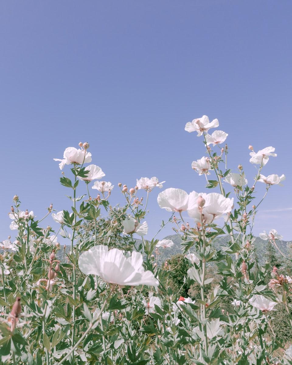2020 - <b>petal clouds 3</b>