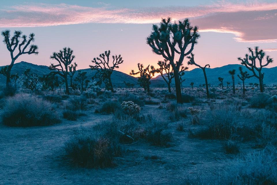 2018 - <b>desert sun 1</b> joshua tree national park, ca