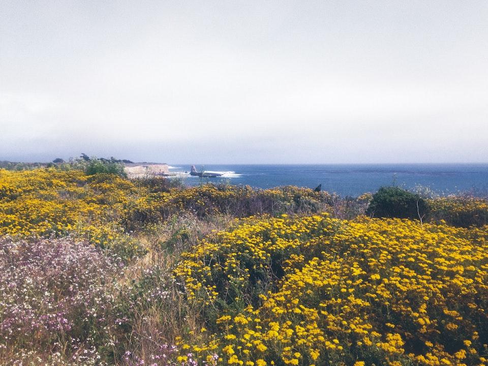Phone - Living Daydream; Four Mile Beach, Santa Cruz, CA