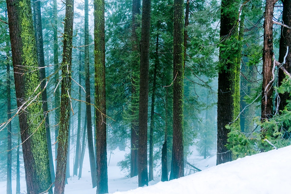 2020 - <b>of the forest</b> sequoia national park, ca