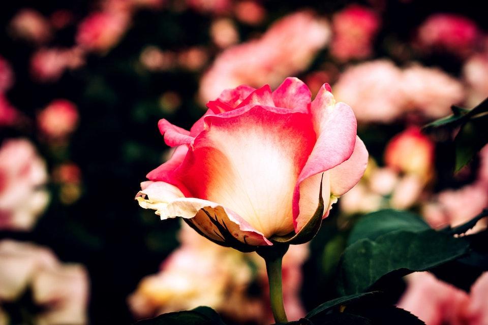 2018 - <b>summer rosé 4</b>