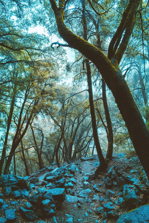 2018 - <b>moss bringer</b> yosemite national park, ca
