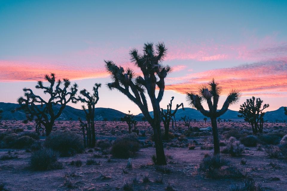 2018 - <b>desert sun 3</b> joshua tree national park, ca