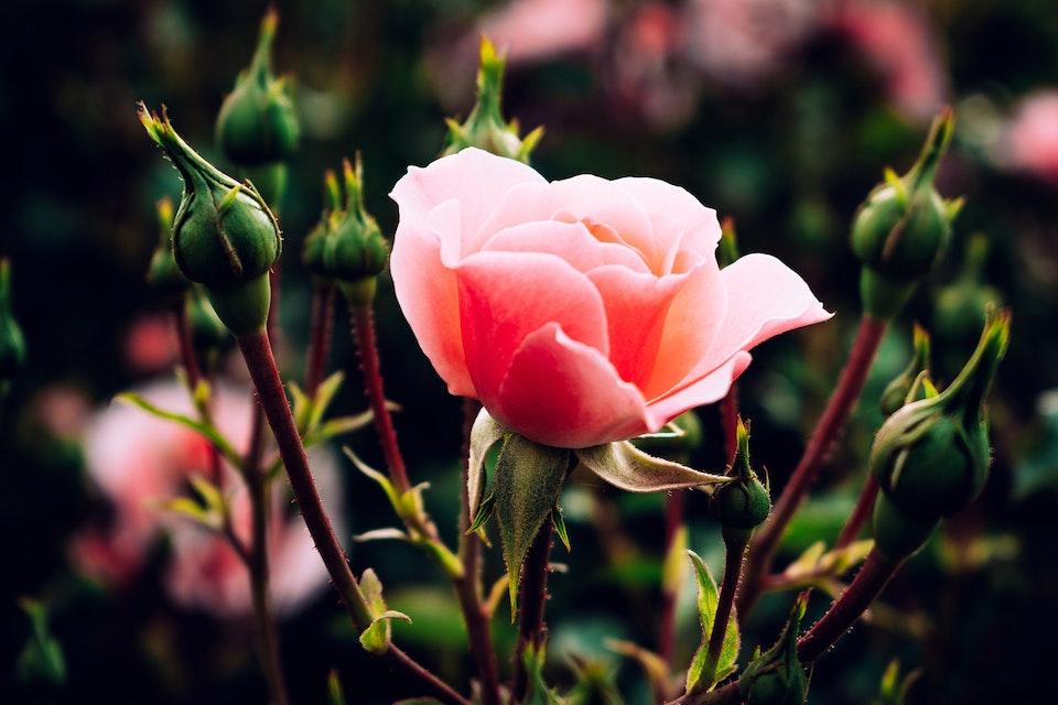 2018 - <b>summer rosé 2</b>