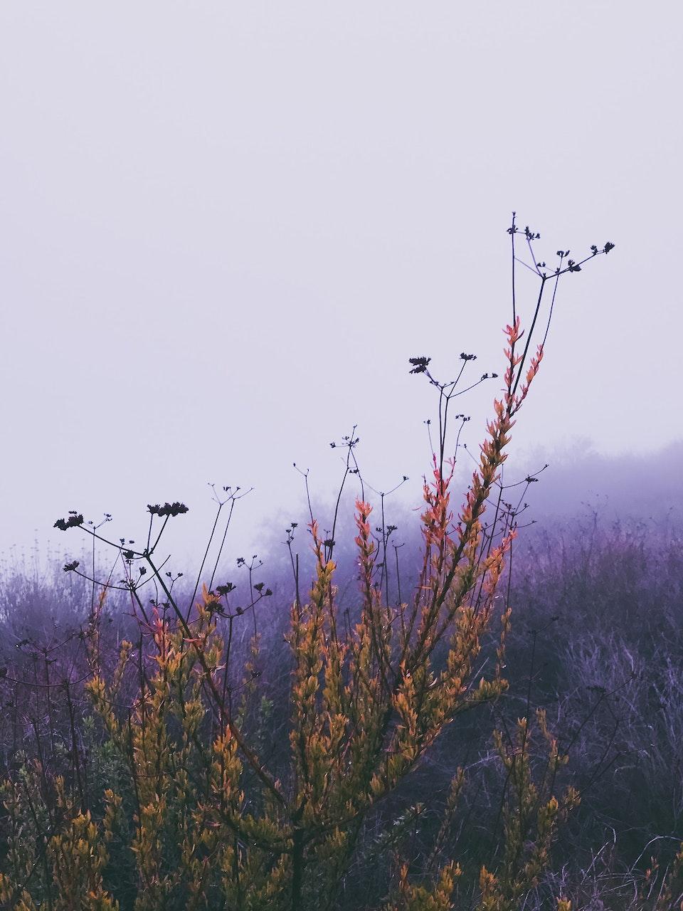 Phone - Fog Sigh; La Tuna Canyon, CA
