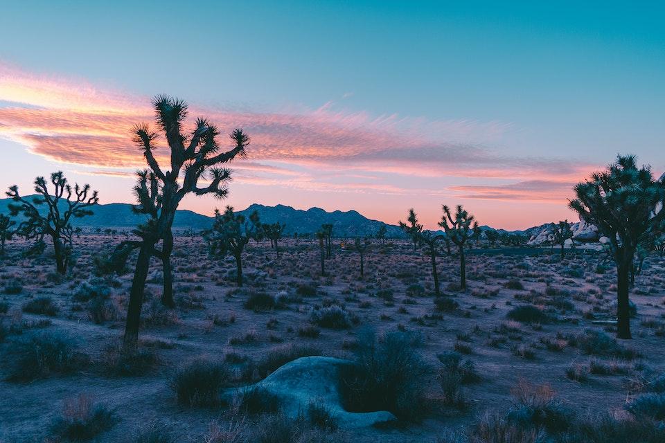 2018 - <b>desert sun 2</b> joshua tree national park, ca