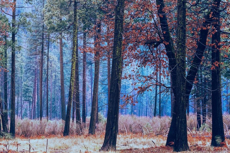 2020 - <b>forest feast 2</b> yosemite valley, ca
