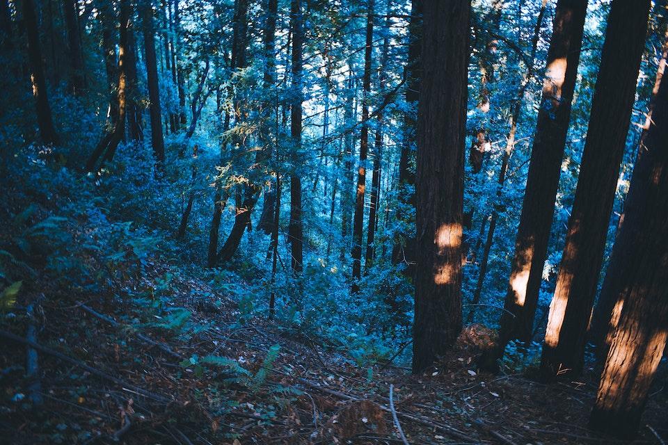 "2018 - <b>blue forest</b> more of this series -> <a href=""https://leahbermanstudio.com/portfolio/forests"" style=""color:#800080;"">santa cruz, ca</a>"