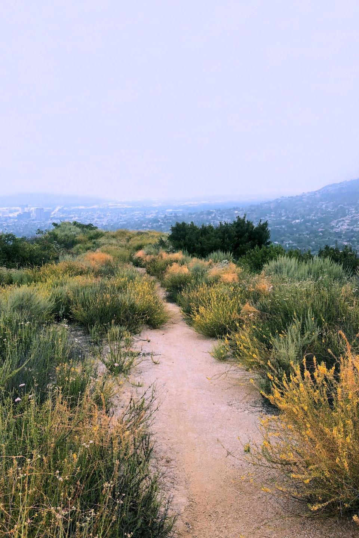 2020 - <b>wildflower ridge 1</b> los angeles, ca