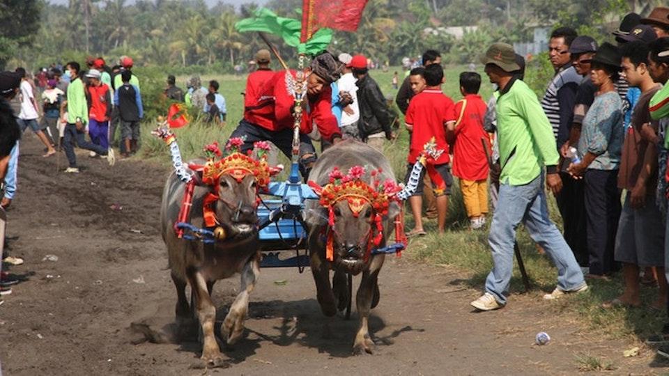 mare TV: Bali - Tropeninsel der tausend Tempel