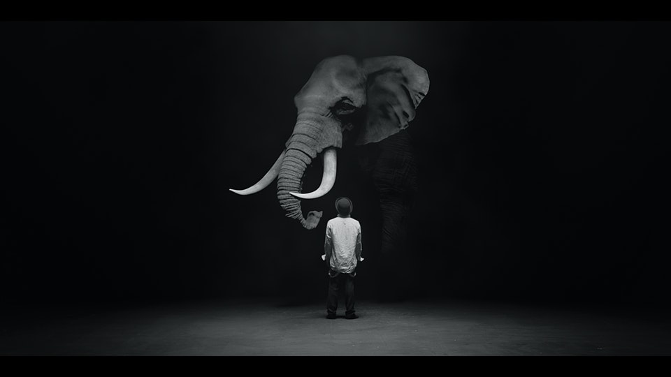 The Dog & The Elephant