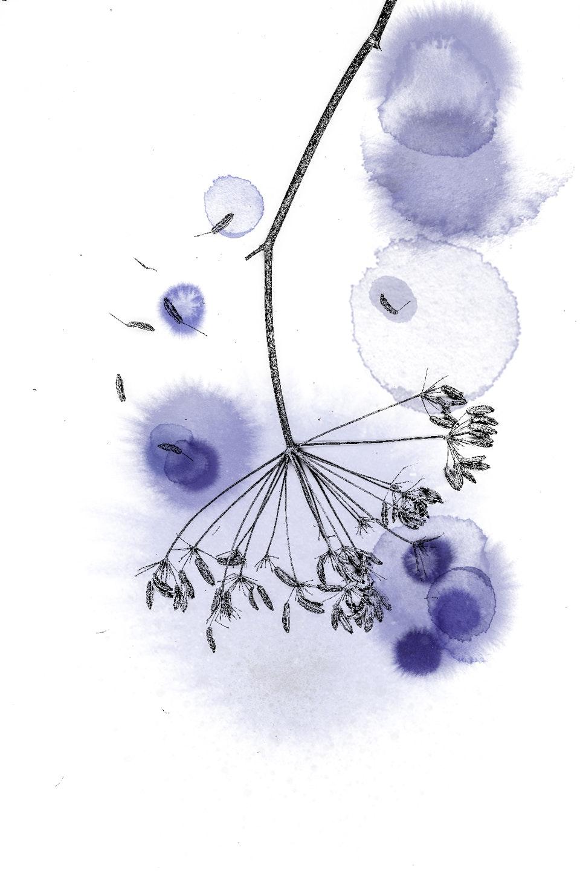 Ingrid Geesink voorstudie bloem blauwe inkt copy -
