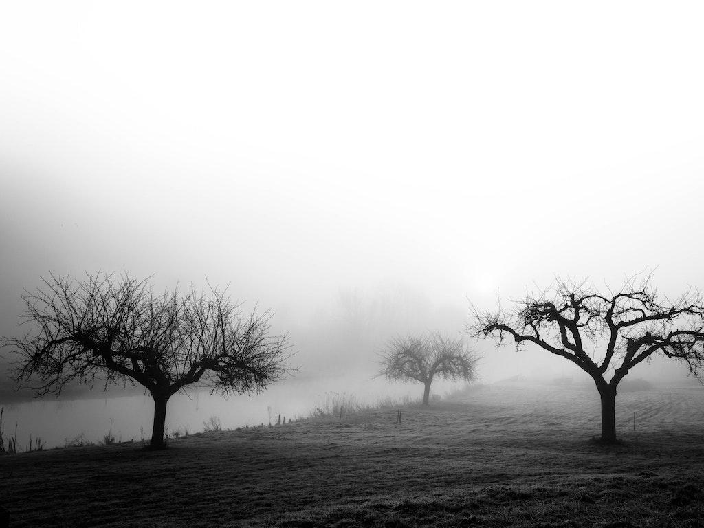 Betuwse bomen