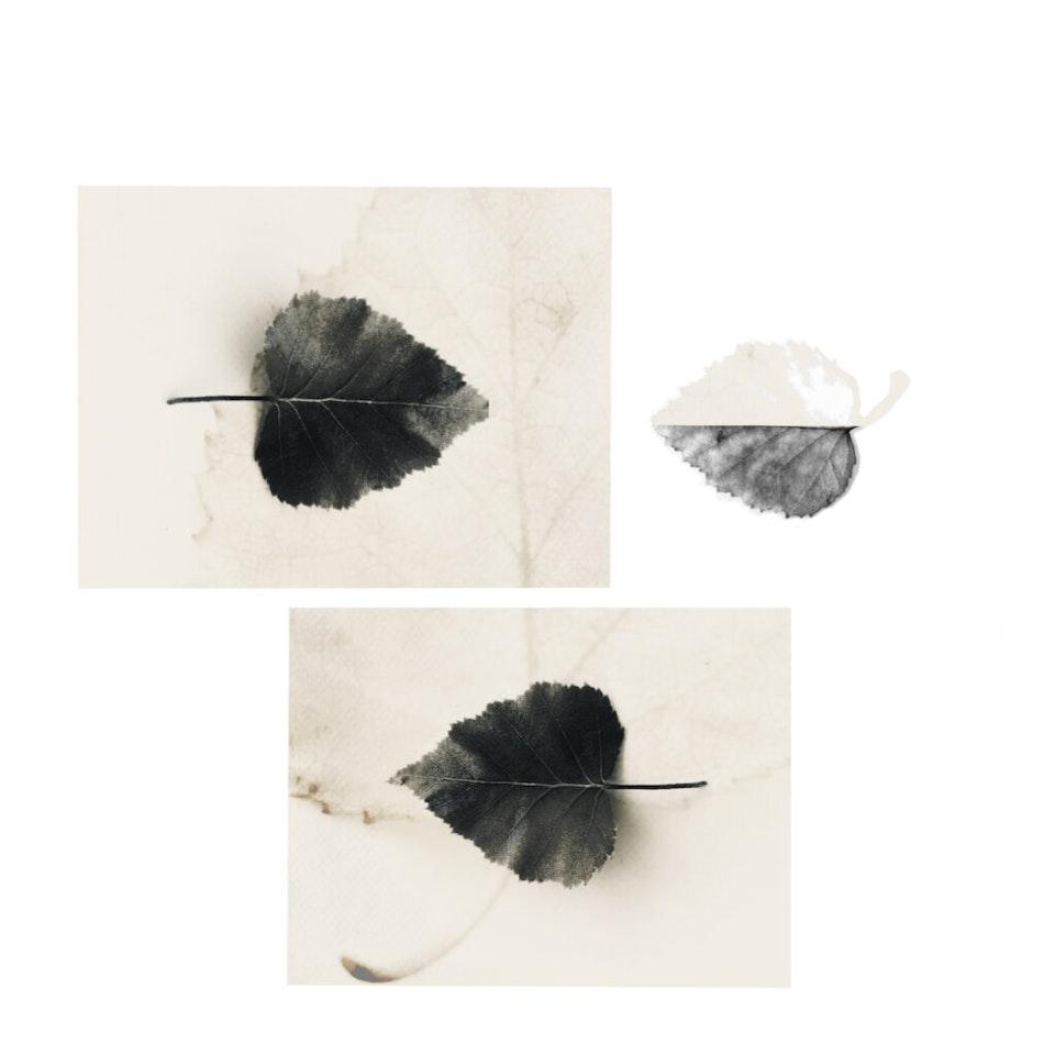 Ingrid-Geesink-Blad-fotocollage-1024x1024 -