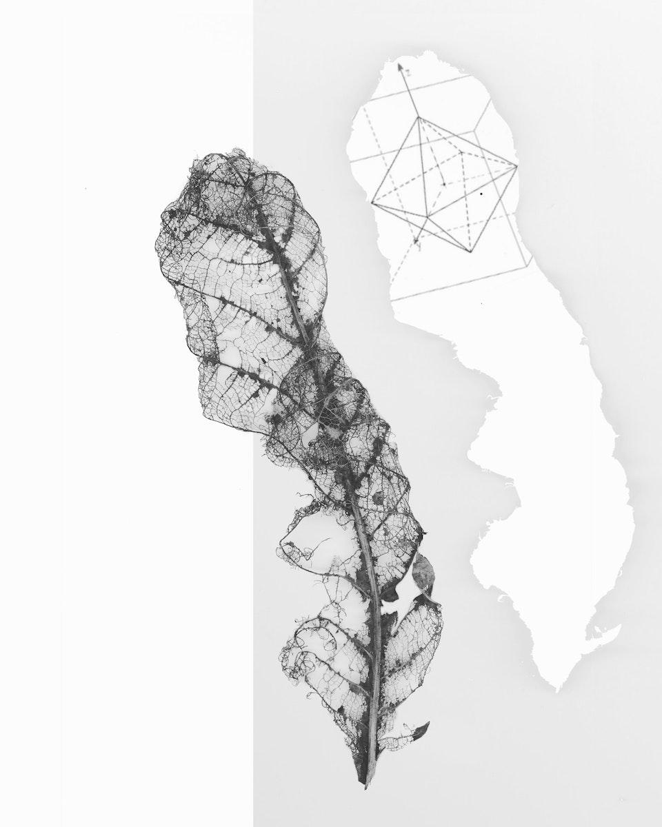 eiland blad -