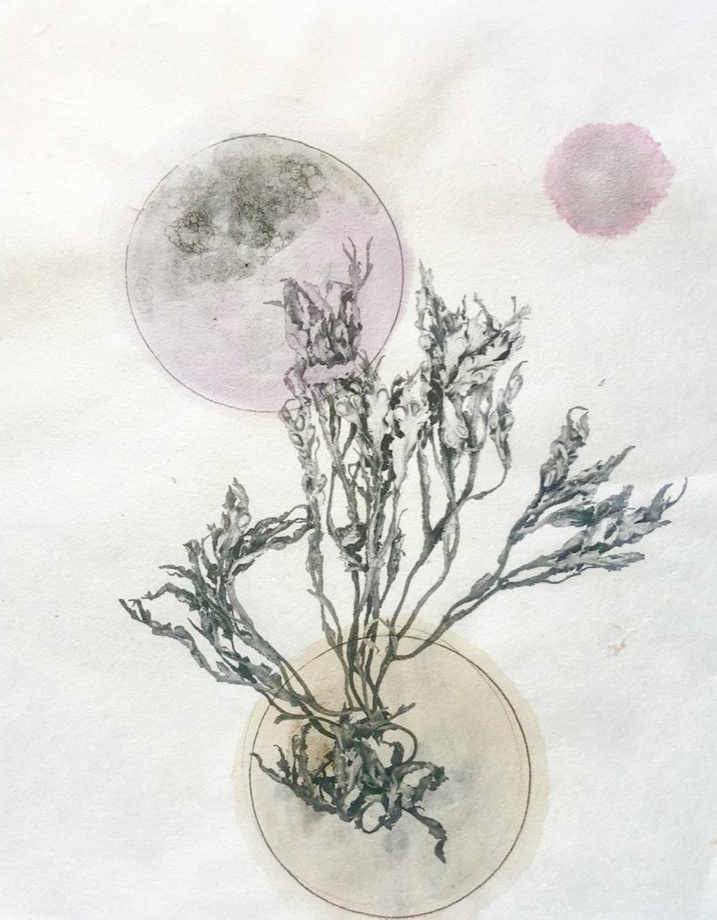 Poëtische plantdrukken in het Gorcums Museum