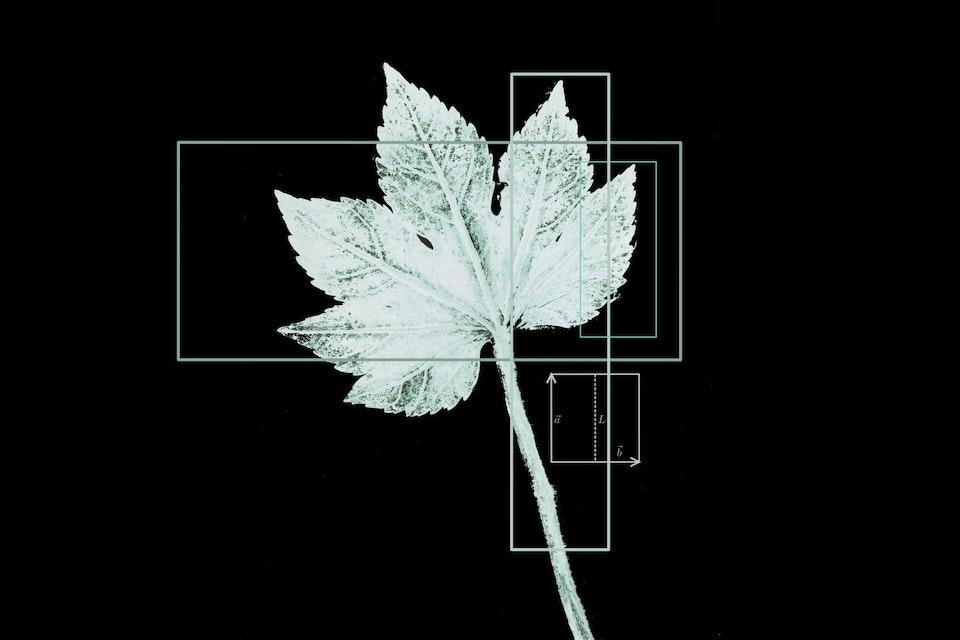plantdruk wisk-invert2 -