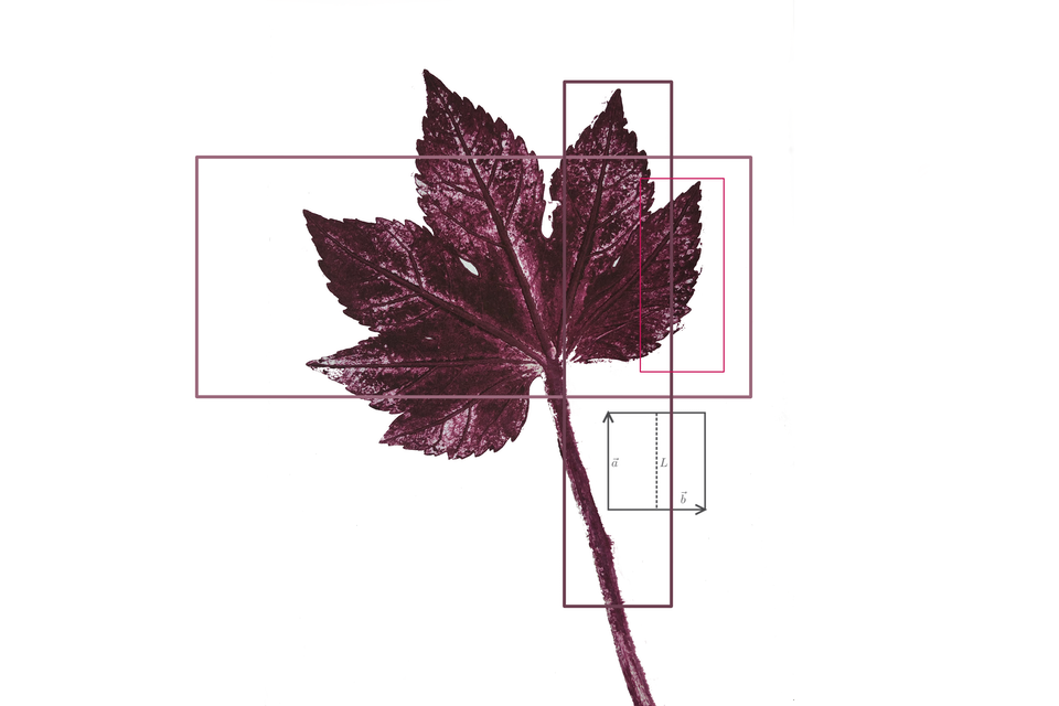 plantdruk wisk -
