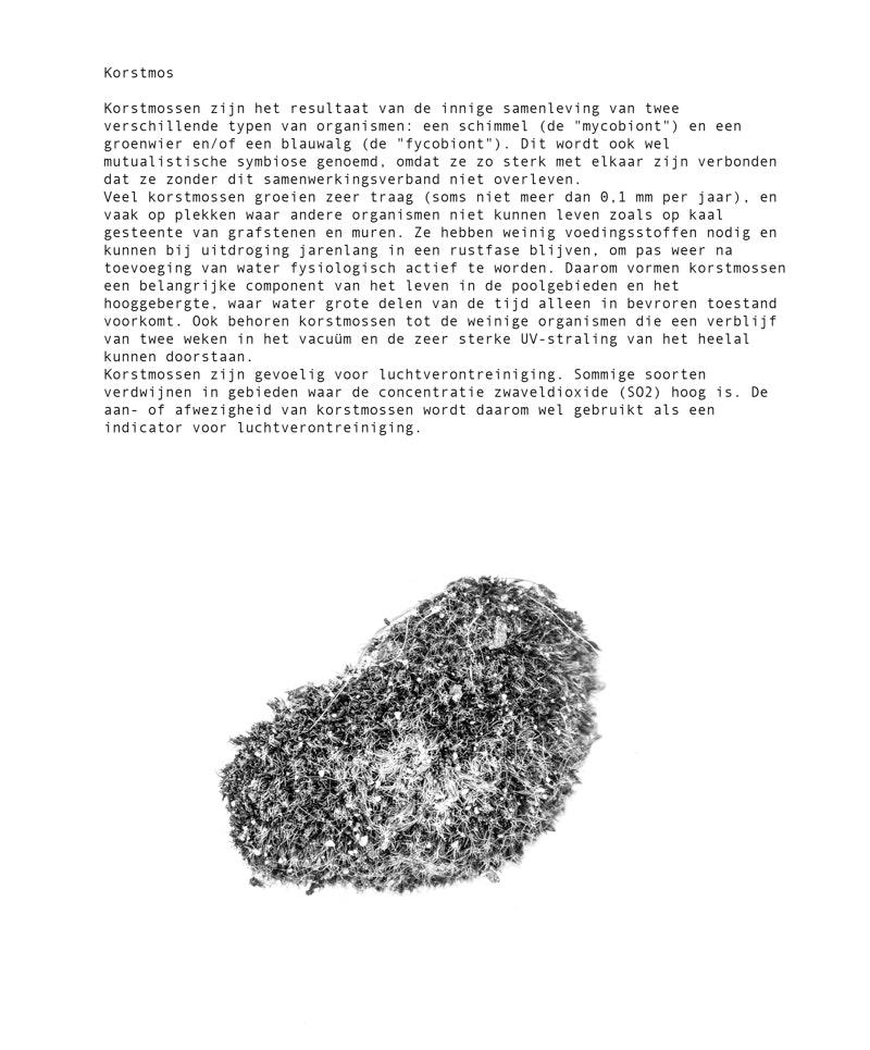 korsmos met tekst -