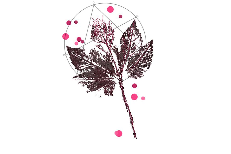 plantdruk circel -