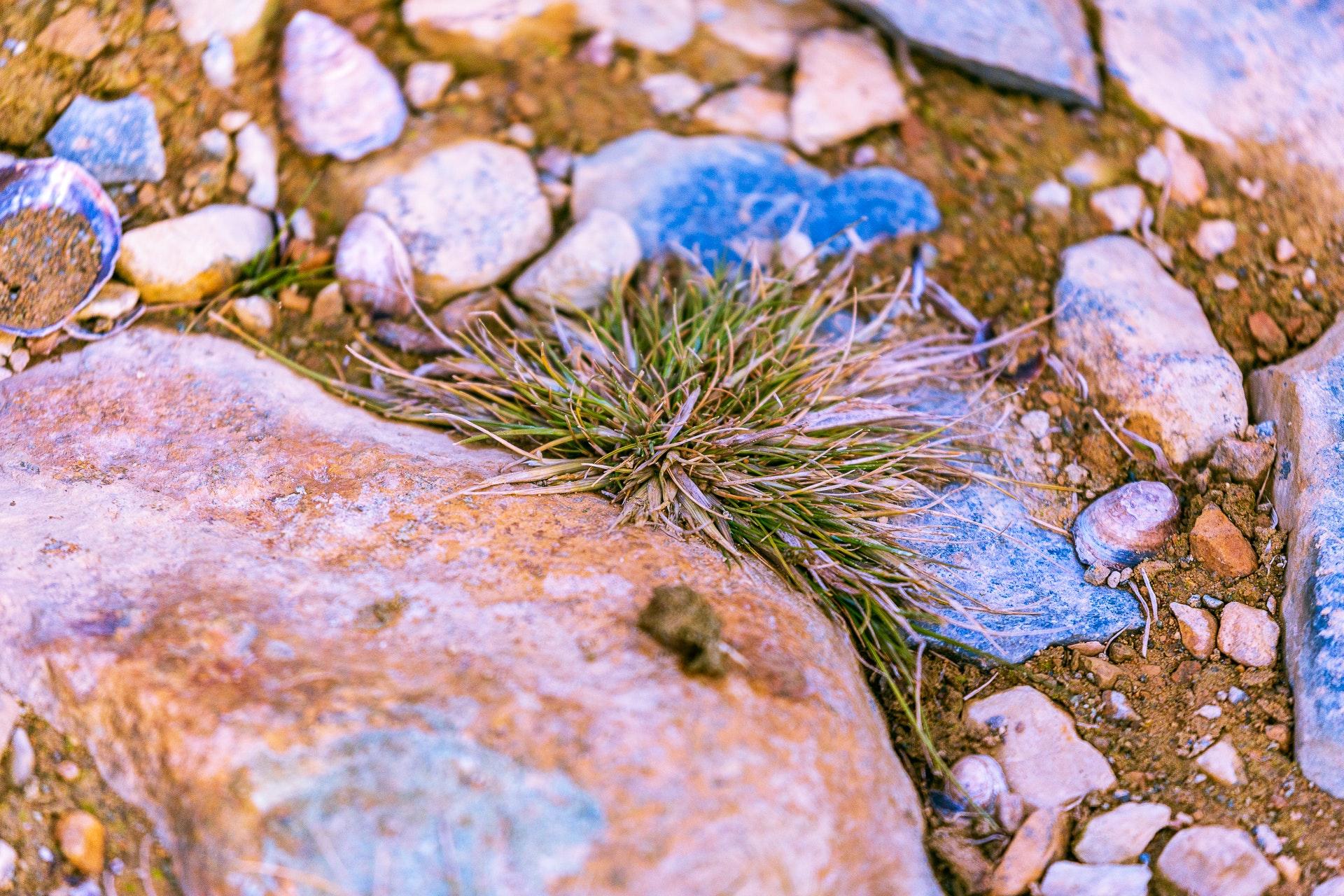 Antarctic Grass