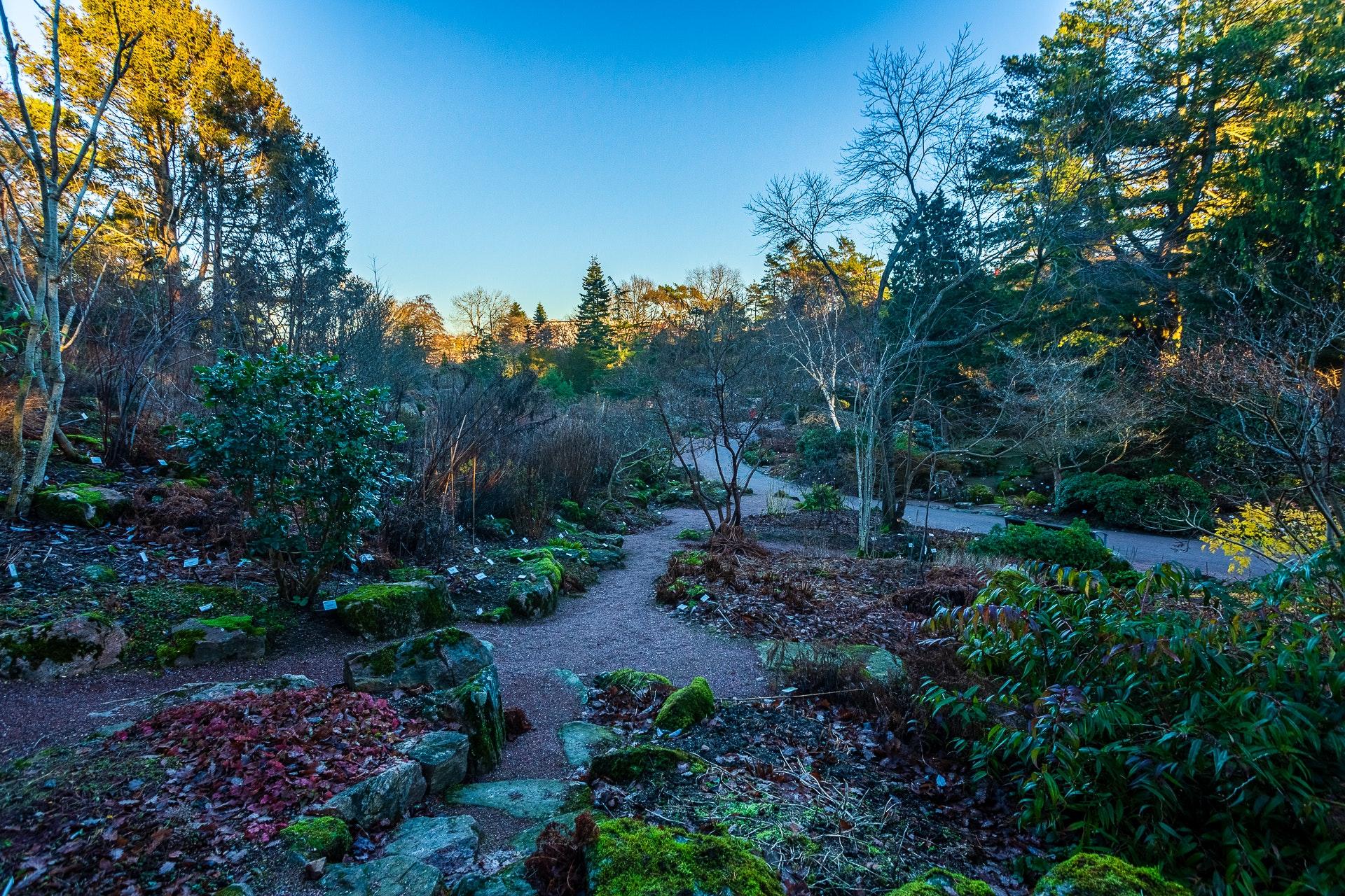 Göteborgs Botaniska Trädgård