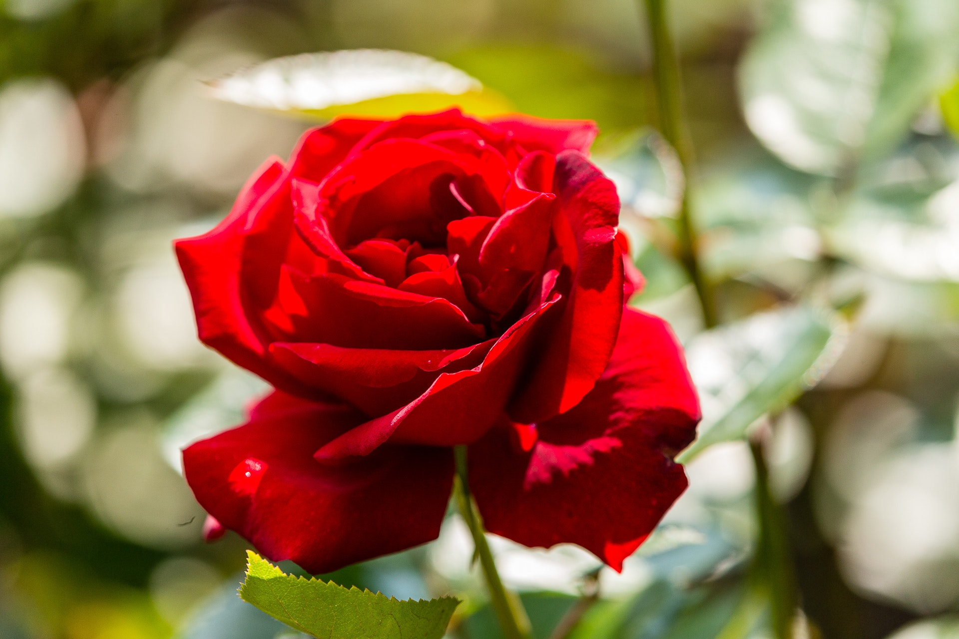 Rose Garden at Sollidens Slott