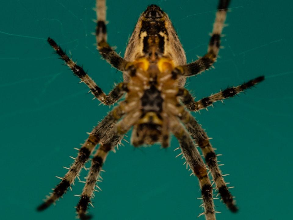 A Tog's Trek - Macro Spider
