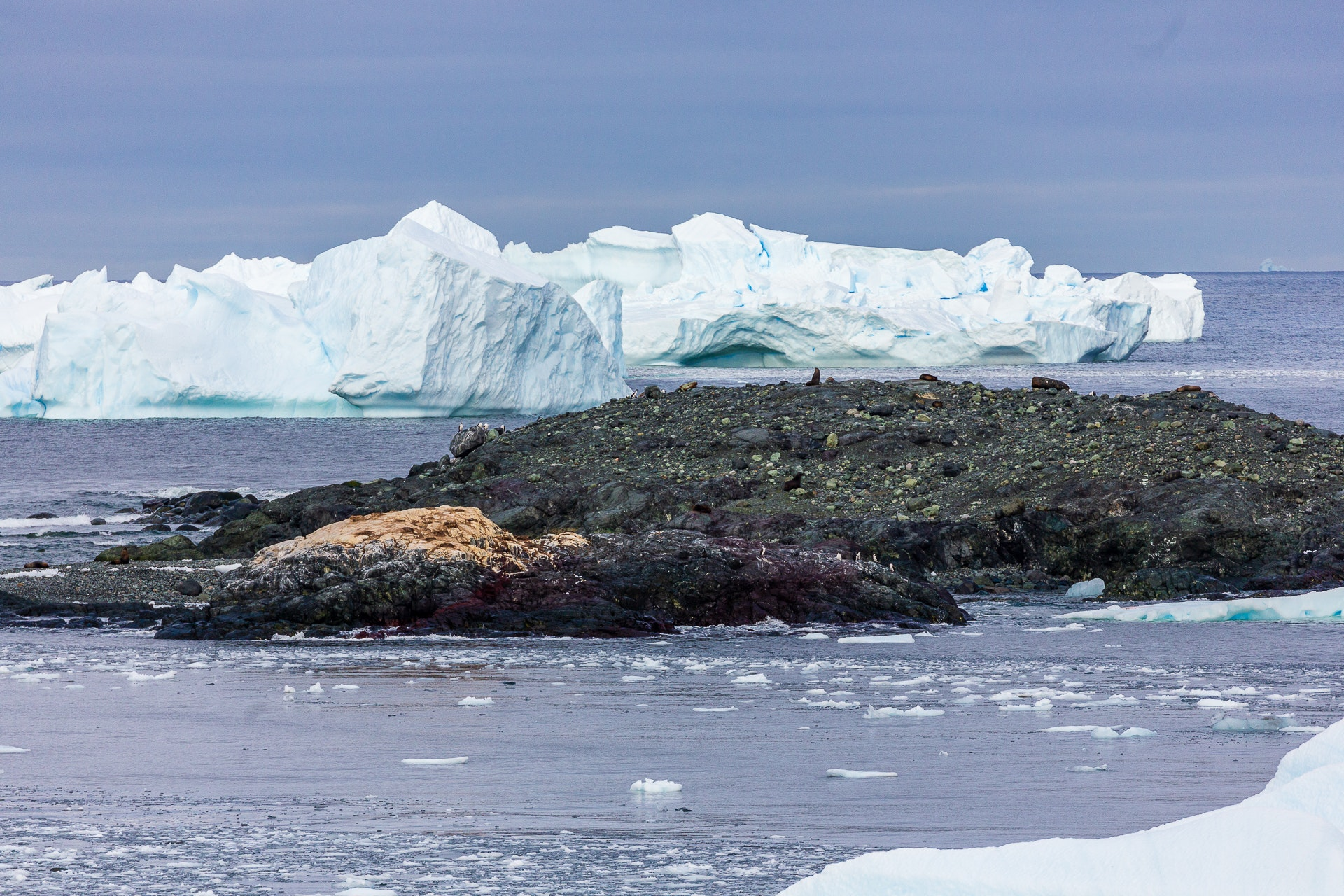 View from Pourquoi Pas Island of penguins & seals